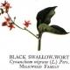 Invasive Plant Species Alert: Black Swallow-Wort