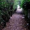 Help Us Create An Agassiz Baldwin Walking Path