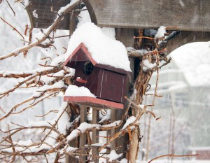 Snowy-bird-house